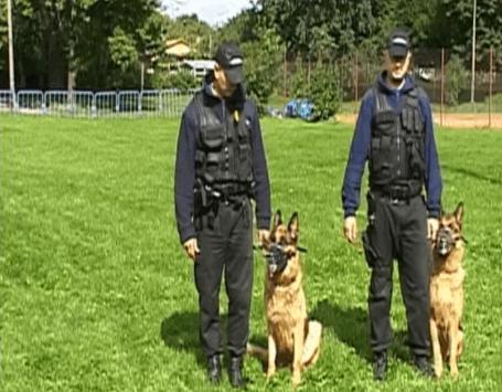 Szkolenie psów - Security